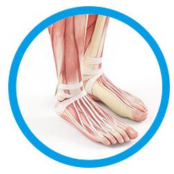 Patologie della caviglia e piede